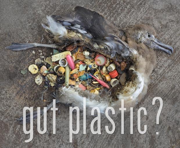 Gut Plastic